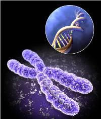 Az örök fiatalság titka - telomerek